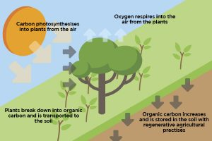 Photosynsthesis in carbon farming