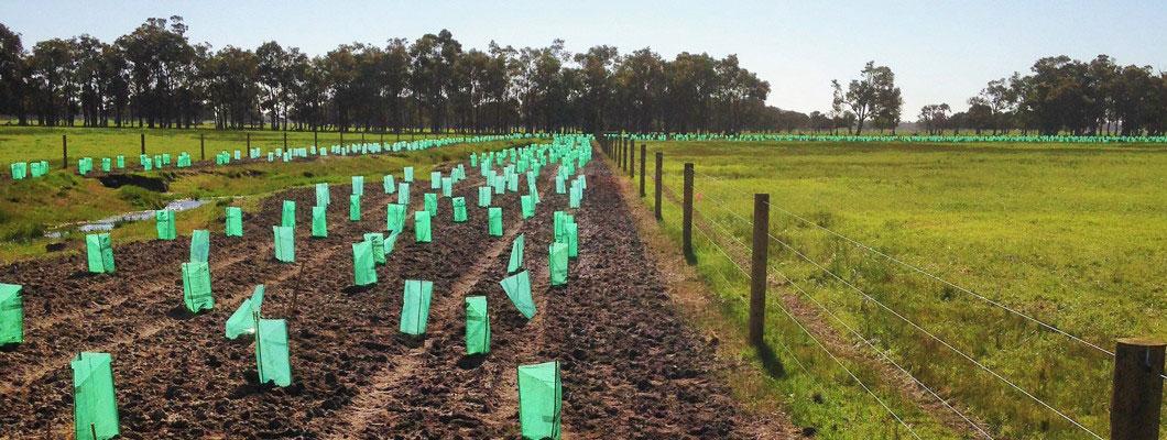 environmental-planting